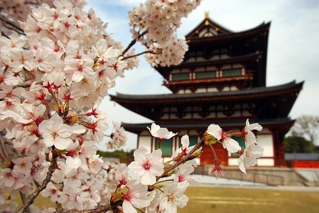 ซากุระที่ญี่ปุ่นบานในช่วงเดือนไหนบ้าง