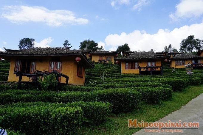 ลีไวน์รักไทยรีสอร์ท-หมู่บ้านรักไทย-เที่ยวไร่ชาที่แม่ฮ่องสอน