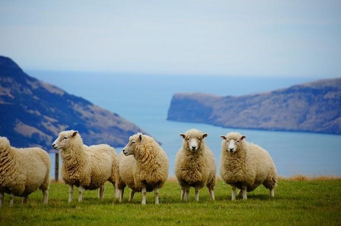เตรียมตัวเที่ยวนิวซีแลนด์-ข้อมูลเบิ้องต้น